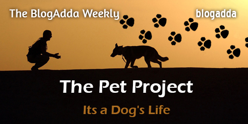 Feature-The-Pet-Project-3