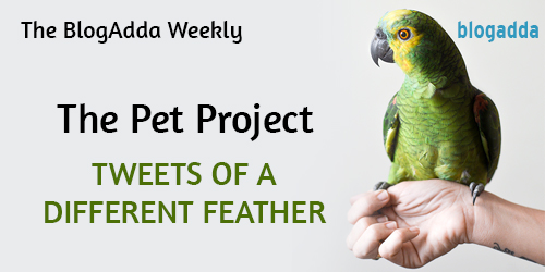 feature-tweets-of-a-different-feather