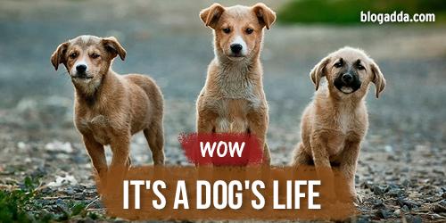 dogs life blog wow